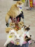 天文館のプチ名物「猫おじさん」が見納め-6年間の散歩に終止符