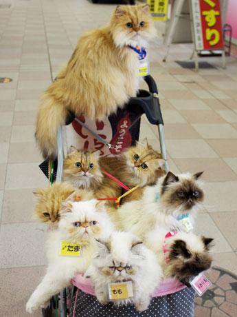 ベビーカーに猫を9匹乗せて天文館を散歩する「猫おじさん」が、3月末をもって見納めになることが分かった。
