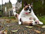 鹿児島で「にゃ~にゃ~写真教室」 猫をかわいく撮る方法指南
