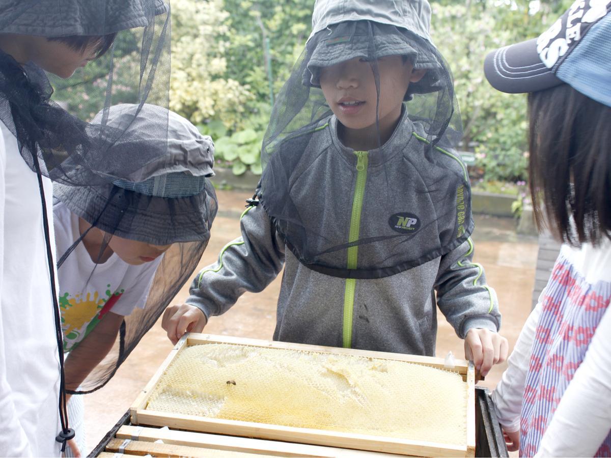 採蜜活動の様子