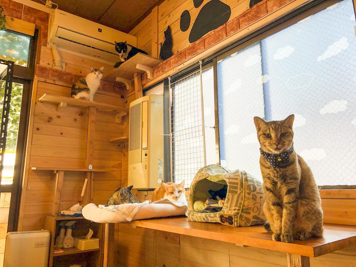 鹿児島中央駅近くに猫カフェ「にゃこる」 お菓子付きの待合室も ...