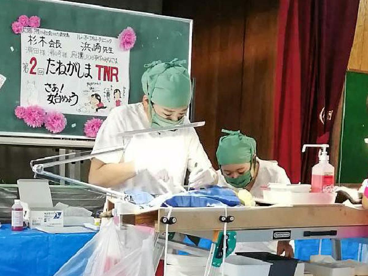 種子島の公民館で避妊去勢手術を行う「ル・オーナ ペットクリニック」の浜崎菜央院長