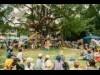 鹿児島で「クリエーティブ」楽しむ野外フェス チケット先行発売始まる