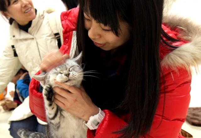 猫と触れ合える「ふれあい広場」の様子