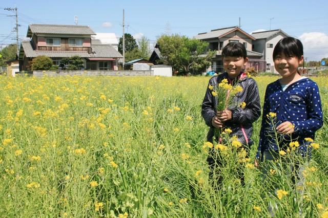 訪れた子供ら。花つみをしながら思い思いに楽しんだ。
