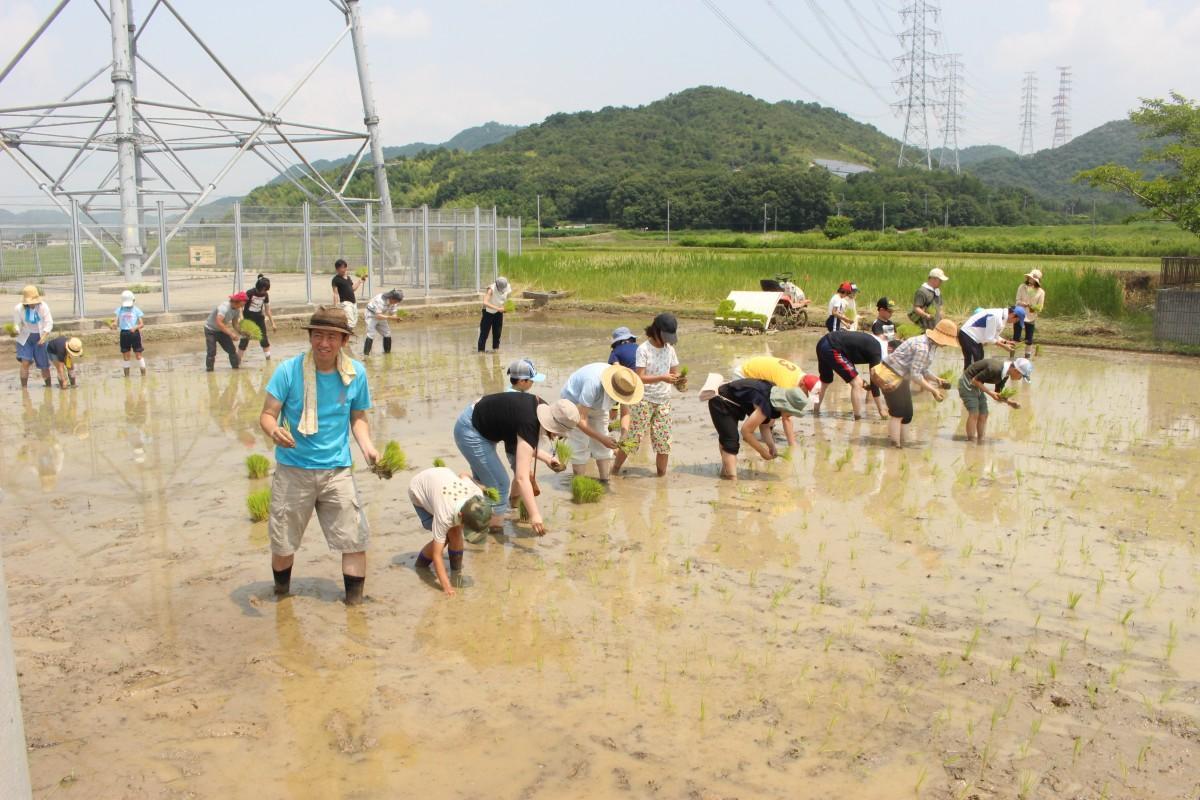 田植え体験を楽しむ参加者