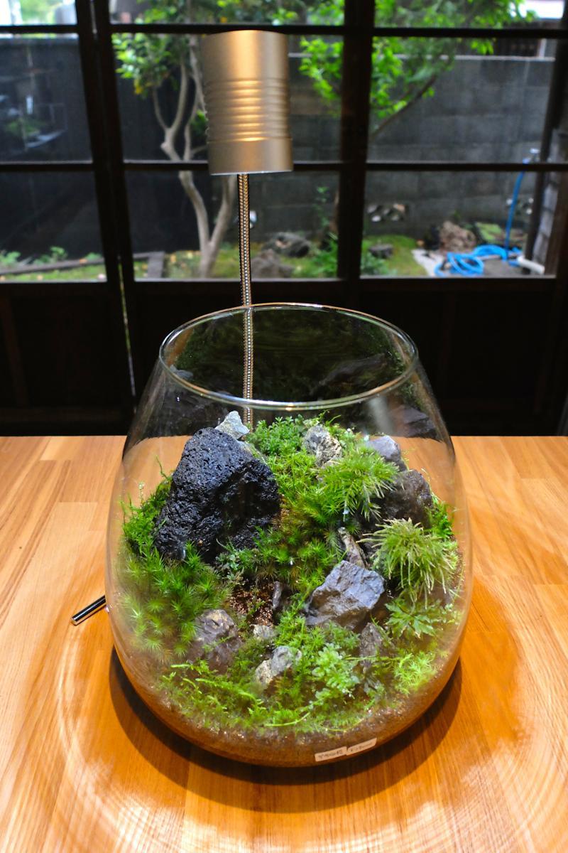 コケテラリウムの作品。ワークショップに参加すれば店内で販売しているパーツで自作も。窓の外にはミズゴケの湿原庭園が見える