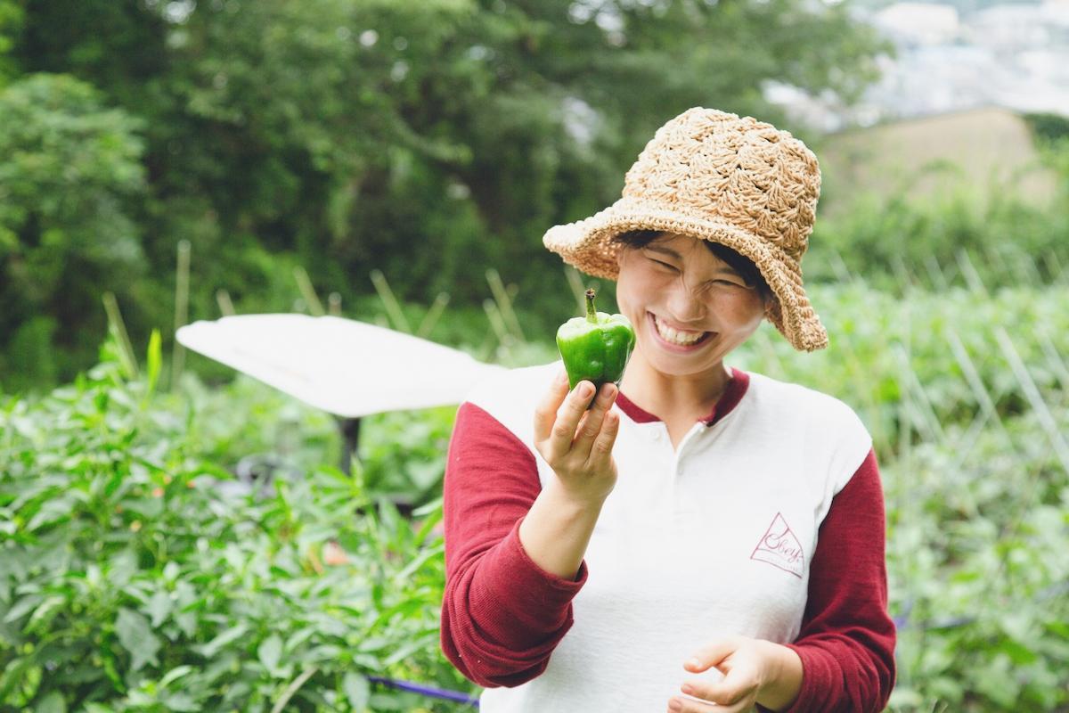 「援農」で収穫作業を体験。とれたてのピーマンの色やつやに思わず笑みが