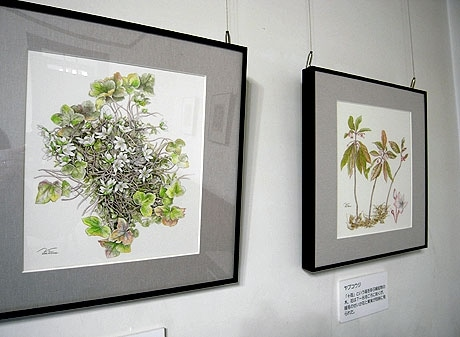 「兼六園の花」展で展示されているボタニカルアート。