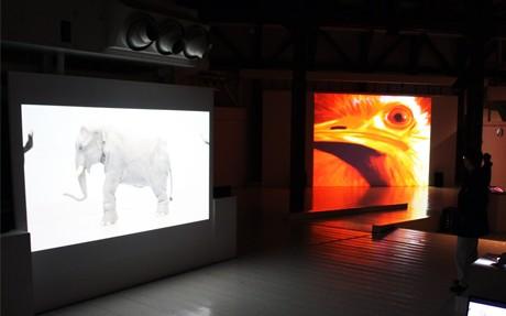 大型スクリーンに映し出された清水さんの作品
