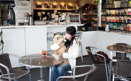 カフェでレンタル犬と遊ぶ来店客