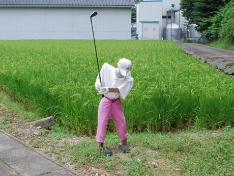茅原町の田んぼのそばに設置されたかかし。足元にはゴルフボールも。