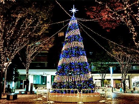 タテマチ広場での点灯が始まったイルミネーションツリー