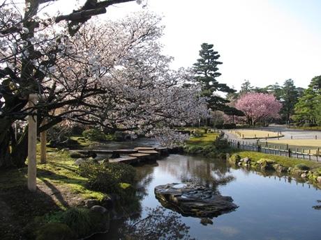 兼六園内の桜