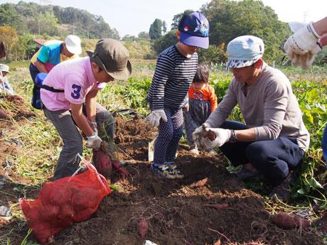 サツマイモ掘りの様子