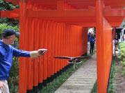 金沢の神社境内で鷹フライト撮影会 金沢育ちのタカが鳥居くぐりなど披露