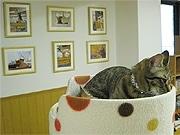 京都の猫カフェ「ねこ会議」、店内のギャラリーで「猫」写真個展