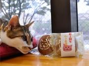 京都の猫カフェ「ねこ会議」が2周年-オリジナルどら焼き配布