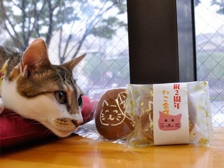 猫カフェ「ねこ会議」は、2周年を記念して7月10日から、利用客に猫の絵がついた同店オリジナルのどら焼きを提供する。