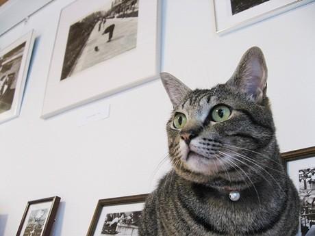 ギャラリーに展示される甲斐扶佐義さんの写真と猫