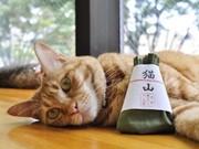 京都の猫カフェ「ねこ会議」が3周年-祇園祭に合わせ「猫山ちまき」進呈