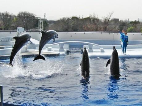 「京都水族館」開業迫る-東寺を背にしたイルカスタジアムも