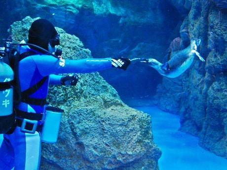 京都水族館の泳ぎが苦手なペンギン、特訓の成果出す-3メートルの潜水 ...