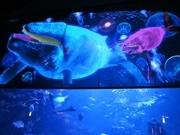 京都水族館でプロジェクションマッピング-映像越しに泳ぐ生き物のシルエットも