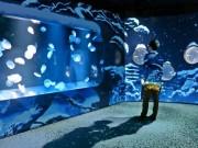 京都・クラゲ水槽が「香る雪景色」に 歩くと足跡や波紋の演出も
