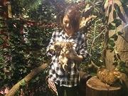 京都・新京極商店街に「京都ひょう猫の森」 ベンガルネコ10匹がお出迎え