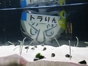 京都水族館に京都国立博物館の「トラりん」登場 両館の連携企画PR