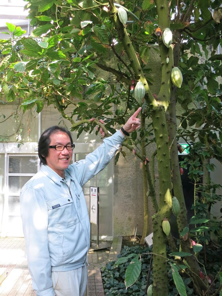 カカオの木と温室を担当する岡垣勝さん