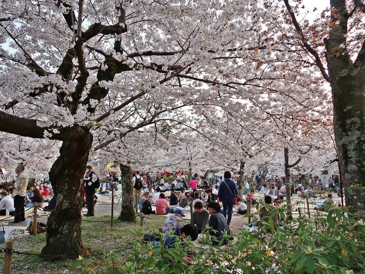 桜の 花見 最初 に 主催