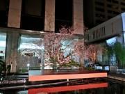 京都・六角堂で夜の特別拝観 池坊の「多国籍チーム」が挑んだ桜の大作も