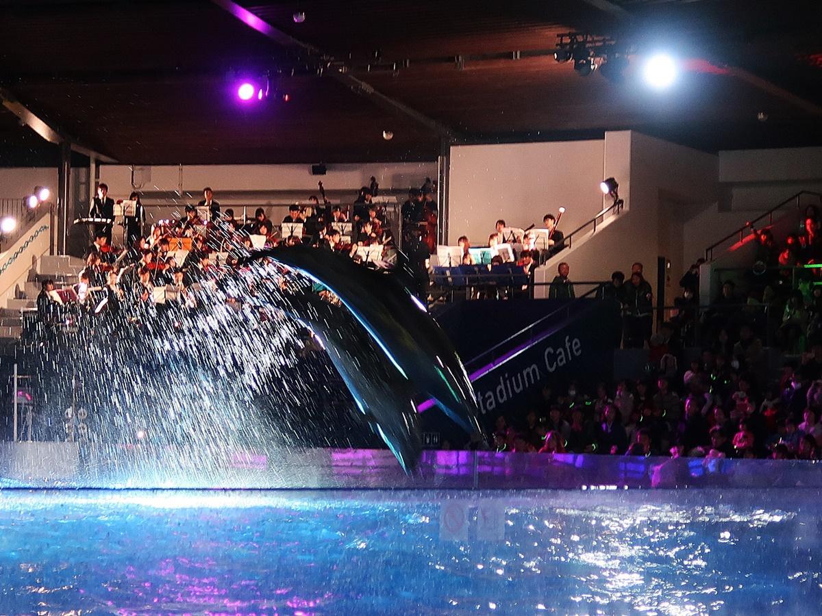 立命館大学交響楽団とジャンプするイルカ。この日はビートとキアとマリアが出演した