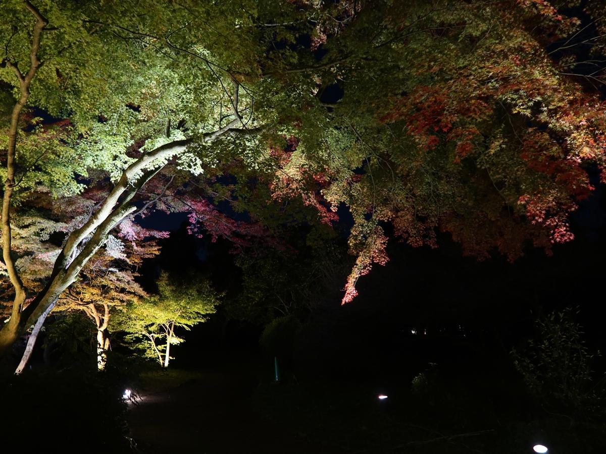 紅葉のライトアップの始まった京都植物園