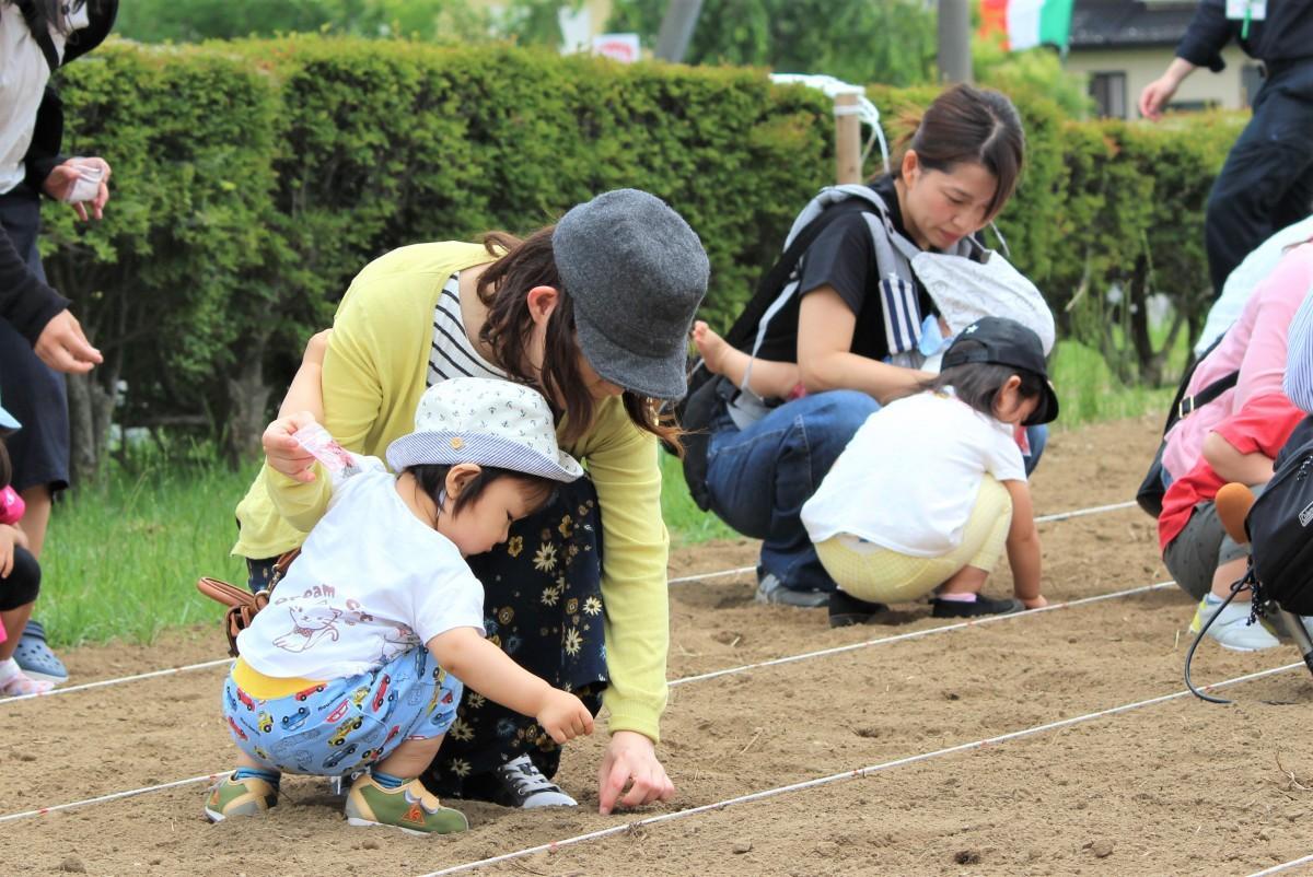 土に指で穴を開けて一つ一つ植えた