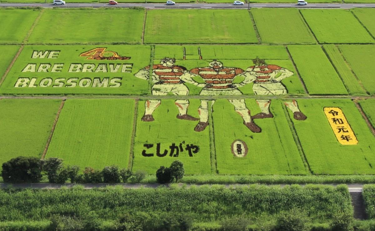 7品種の稲で表現した田んぼアート
