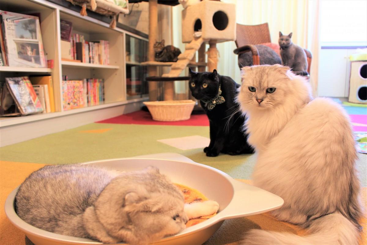 現在15匹の猫がいる
