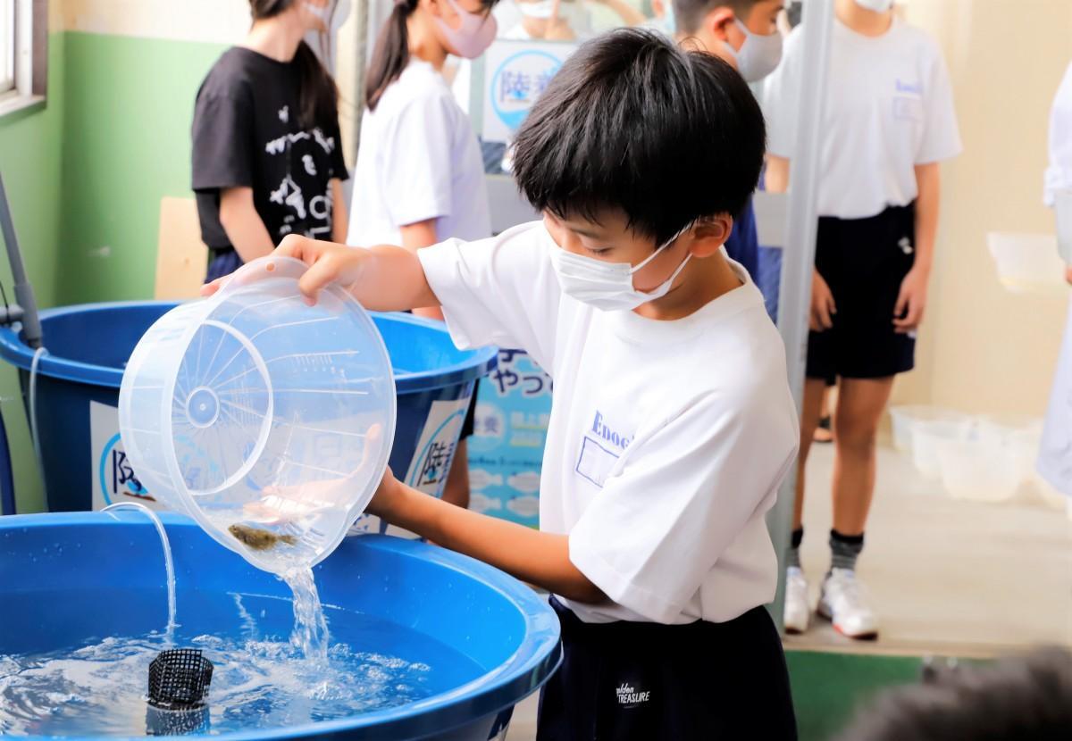 ヒラメを水槽に入れる生徒