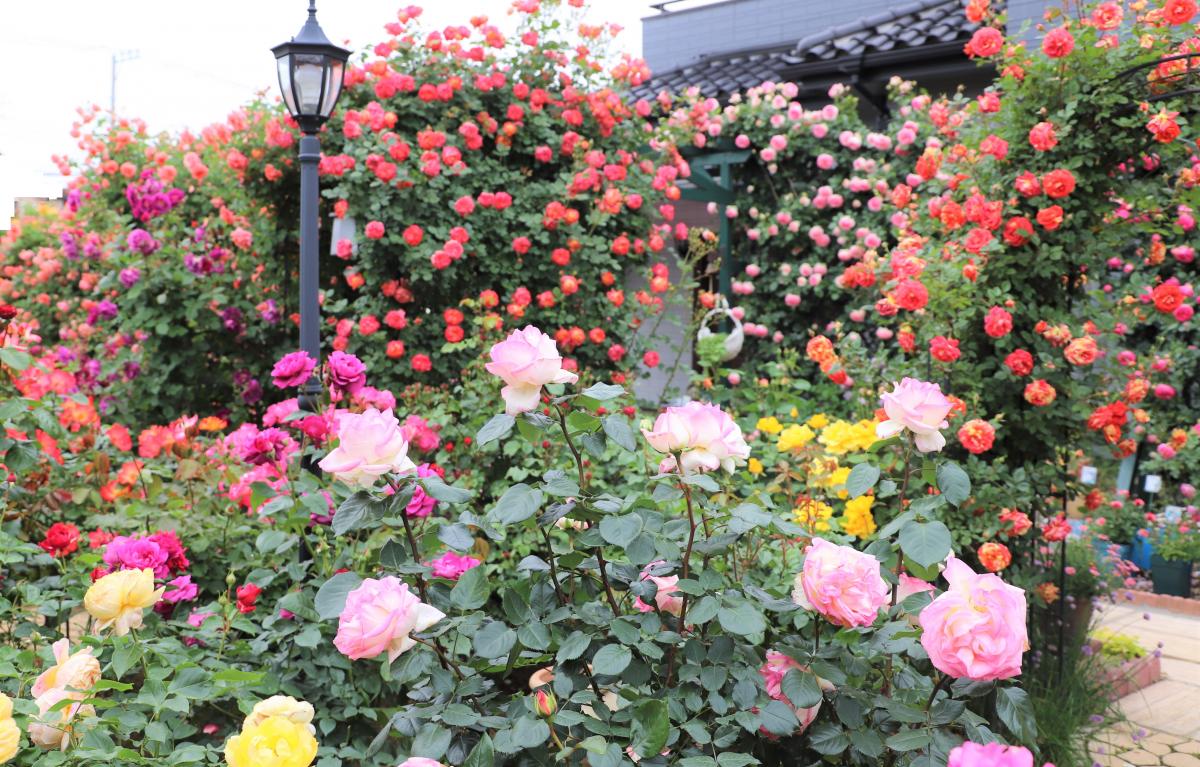 ニュース配信時の遠藤さん宅の庭