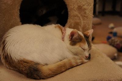 保護猫カフェ「ねこかつ」で里親を待つ猫