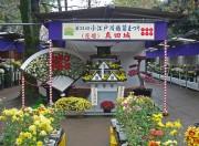 川越・喜多院「菊まつり」に500作品 菊苗の販売も