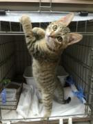 川越市保健所で「保護猫の譲渡会」 登録動物愛護団体協力、殺処分猫軽減へ