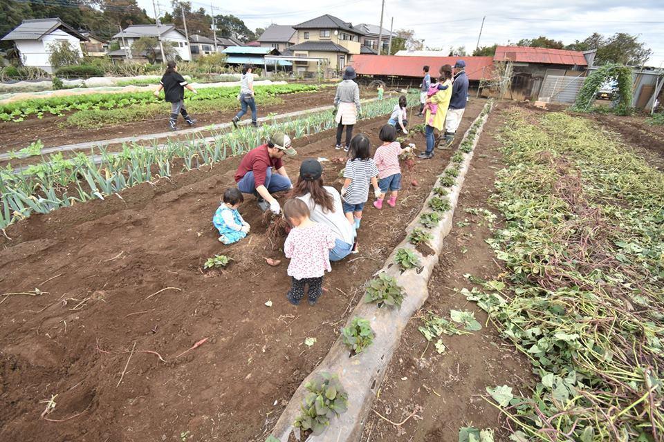 出展者の芋畑(芋ほり)