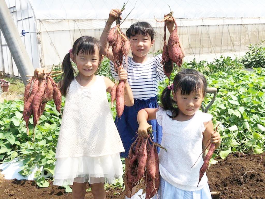 山田園の「芋掘り観光」