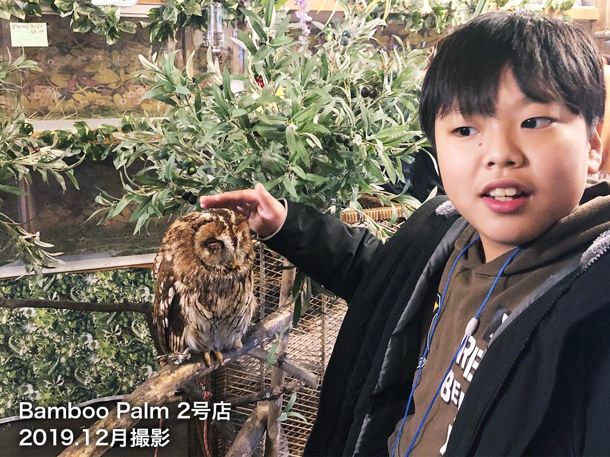 動物と触れ合えるバンブーパーム2号店店内(2019年撮影)