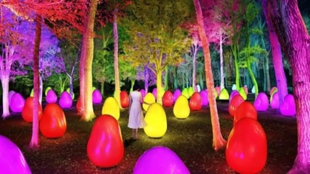「チームラボ どんぐりの森の呼応する生命」幻想的な夜間展示の様子