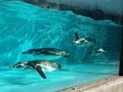 夢見ヶ崎動物公園で裏側のぞくイベント 「飼育の日」にちなみ