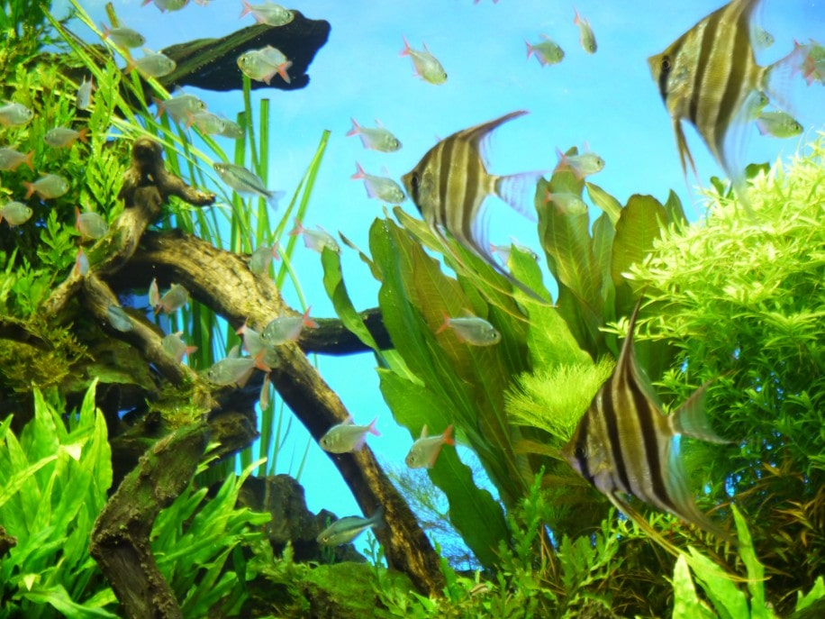 魚だけでなく、水草や岩などの配置にも工夫が凝らされている